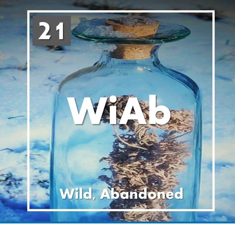 Wild, Abandoned: 2021